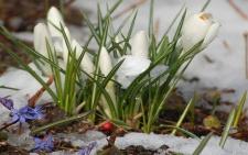 Куда осенью приходит весна