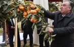 Сбор урожая в дехканском хозяйстве «Навруз»
